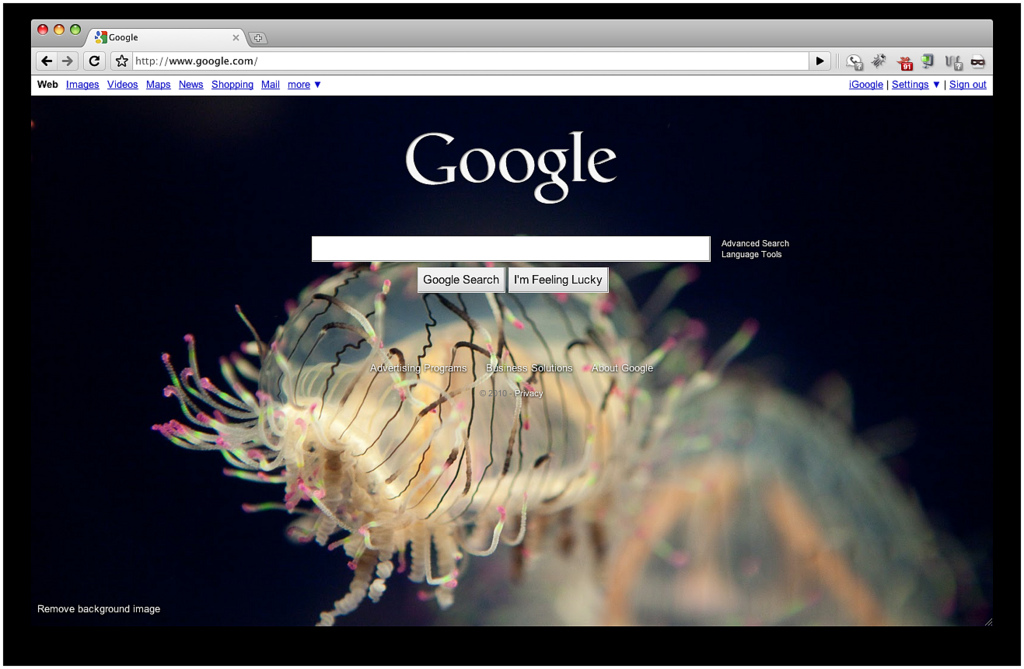 By TenSafeFrogs, Jellyfish on Google (CC BY SA 2.0), vía Flickr